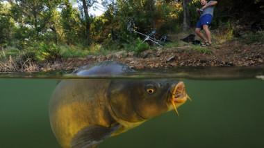Nem mindenhol lehet pontyra horgászni a Balatonnál