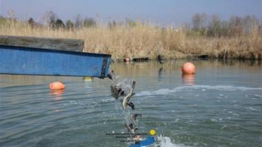 1 tonna halat telepítettek a Balatonba